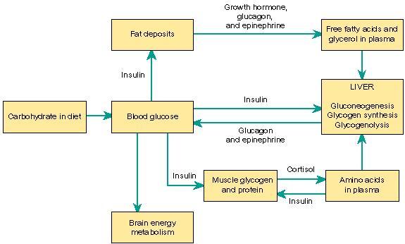 diabetes de la fructosa wikipedi